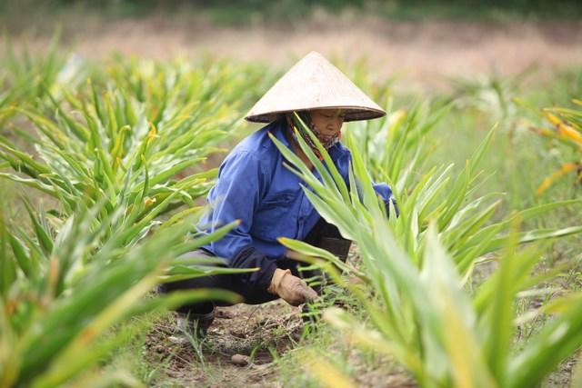 IMC – Mong muốn xây dựng bảo tồn nguồn dược liệu Việt Nam